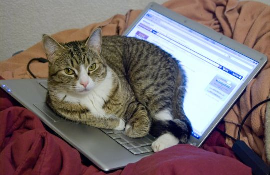computer_cat_authoritative