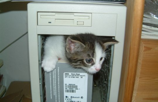 computer_cat_explorative